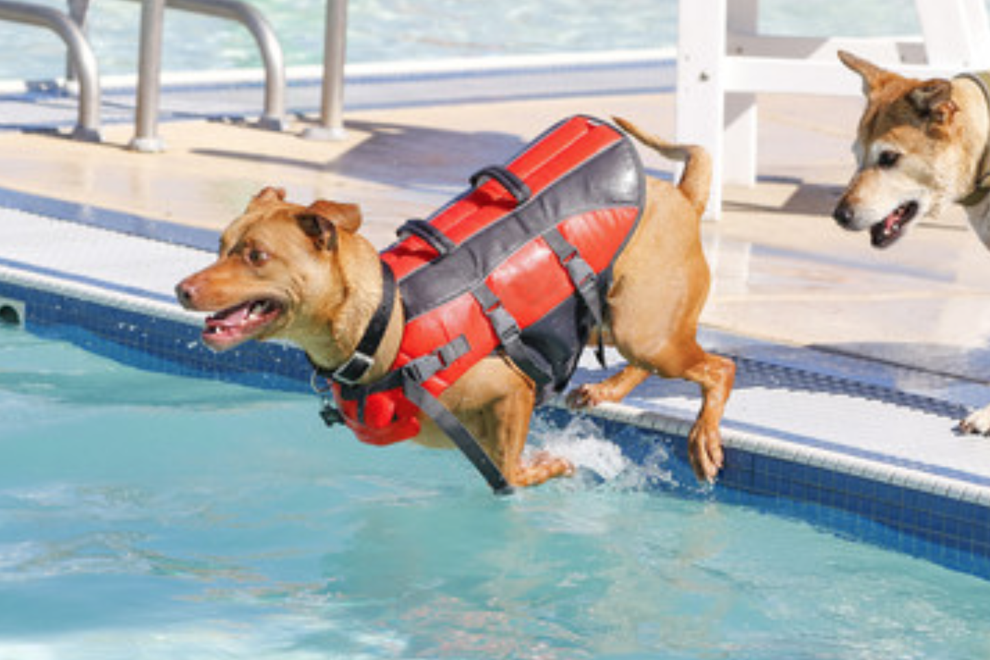 pool pet safety